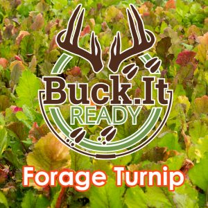 Buck.It Ready Forage Turnip